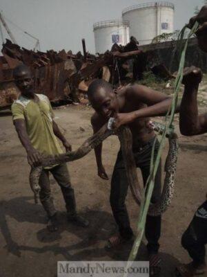 Big Snake Terrorizing Kirikiri Residents At Night In Lagos Finally Killed (Photos)